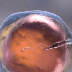 60-Day Study Suggests Covid May Cause Significant Damage to Male Fertility