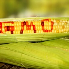 80 Groups Blast U.S. for Interfering With Mexico's Plan to Ban Glyphosate and GMO Corn