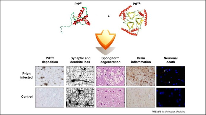 The intricate mechanisms of neurodegeneration in prion diseases