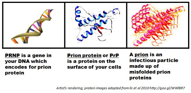 Prion Disease mRNA COVID-19 Vaccines